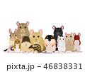 ネズミ 種類 グループ 46838331