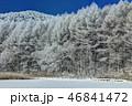 聖高原 霧氷 樹氷の写真 46841472