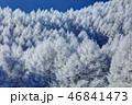 聖高原 霧氷 樹氷の写真 46841473