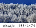 聖高原 霧氷 樹氷の写真 46841474