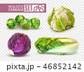 Realistic Cabbage Set 46852142