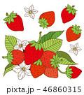 苺 フルーツ 果物のイラスト 46860315