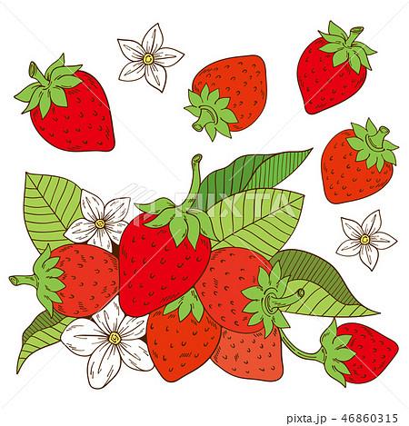 苺のイラストのイラスト素材 46860315 Pixta