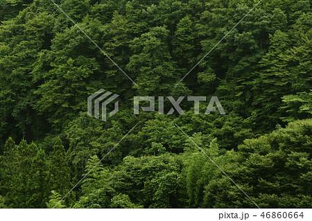 森 雑木林 森林 深山 深林 木 樹木 自然 ネイチャー 背景 森背景 緑 植物 環境 エコロジー 46860664
