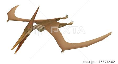 翼竜:プテラノドンのイラスト素材 [46876462] - PIXTA