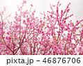 blurred sakura tree background 46876706
