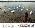鳥 子供 鴨の写真 46882016