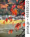 嵐山 紅葉 枝の写真 46889110