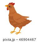 鶏 動物 鳥のイラスト 46904467