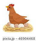 鶏 卵 玉子のイラスト 46904468
