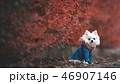 46907146