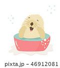 Funny otter taking shower sitting in a wash-basin 46912081