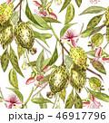 植物 フィジョア くだもののイラスト 46917796