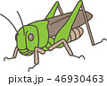 バッタ 46930463