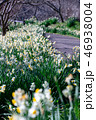 接写 緑色 植物の写真 46938004