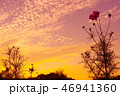 コスモスと夕焼け 46941360