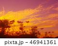 夕焼けとコスモス 46941361