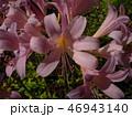 植物 花 秋の写真 46943140