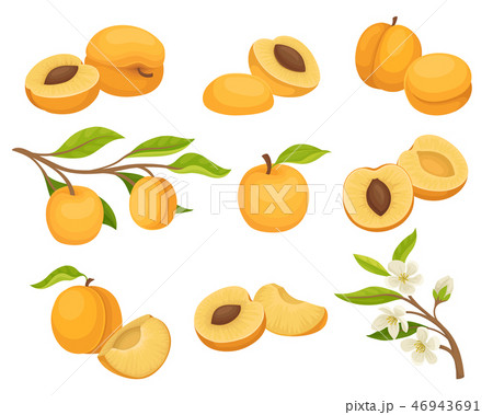 Flat vector set of apricot icons. Juicy and ripe summer fruit. Small branch with flowers. Natural 46943691