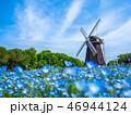 風車とネモフィラの花 46944124