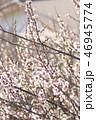 梅 花 春の写真 46945774