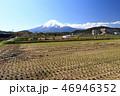 稲 水田 日本の写真 46946352