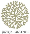 海藻 海松紋(みるもん)ベクター素材 46947896