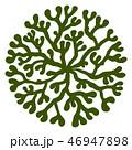 海藻 海松紋(みるもん)ベクター素材 46947898