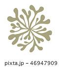 海藻 海松紋(みるもん)ベクター素材 46947909