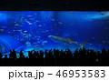 whale sharks 46953583