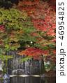 夜の好古園の紅葉 46954825