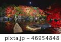 夜の好古園の紅葉 46954848