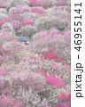 花 植物 花びらの写真 46955141