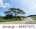小浜島 松 竹富町の写真 46957971