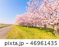 花 フラワー 景色の写真 46961435