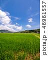 水田 田んぼ 風景の写真 46961557