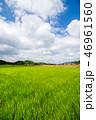 水田 田んぼ 農業の写真 46961560