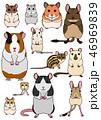 ネズミの仲間 ペット 素材 46969839