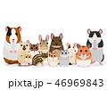ネズミの仲間 ペット グループ 46969843