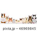 ネズミの仲間 ペット ボーダー 46969845