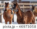 冬 馬 牧場の写真 46973058