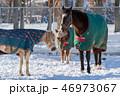 冬 馬 牧場の写真 46973067