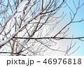雪 枝 冬の写真 46976818