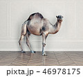 the camel in the room. 46978175