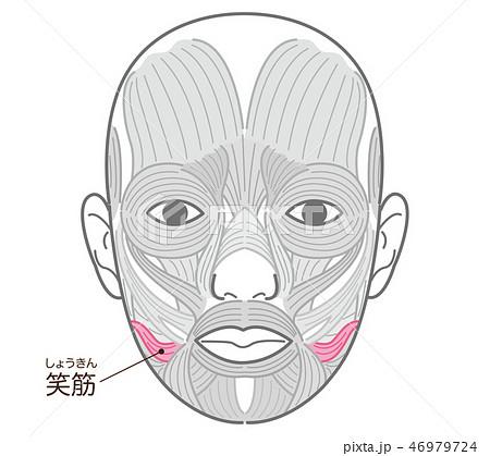 笑筋(しょうきん) 46979724