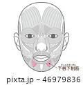 下唇下制筋(かしんかせいきん) 46979836