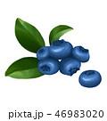 ブルーベリー ベリー 果物のイラスト 46983020