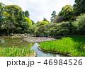平安神宮神苑の風景 (京都府京都市左京区) 2017年4月 46984526