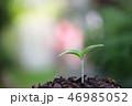 成長 育つ 葉の写真 46985052
