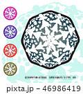 CACTUS08_Astrophytum Asterias 001 46986419